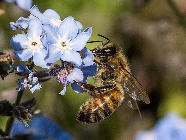 Associations and nonprofits can protect bees and other pollinators when they hire DelCor for technology strategy and support.