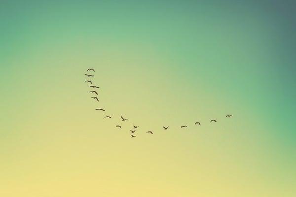 birds-flying-south.jpg