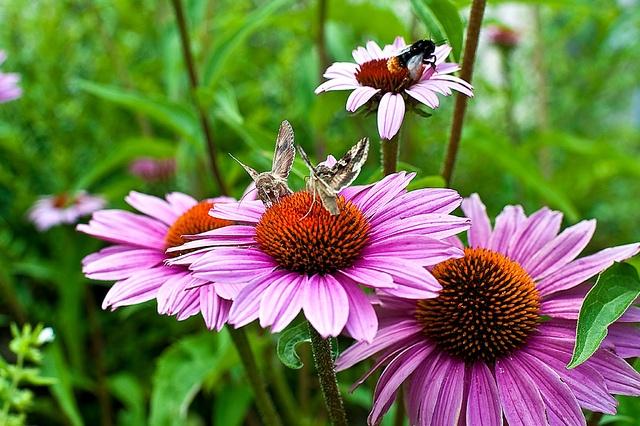 pollinators-at-work.jpg